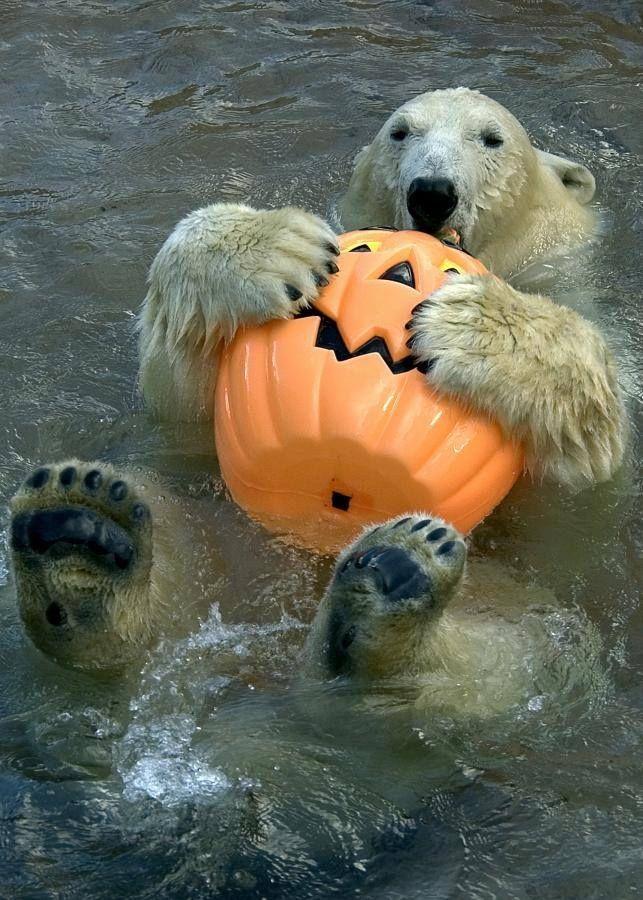 Toledo Zoo Images Halloween