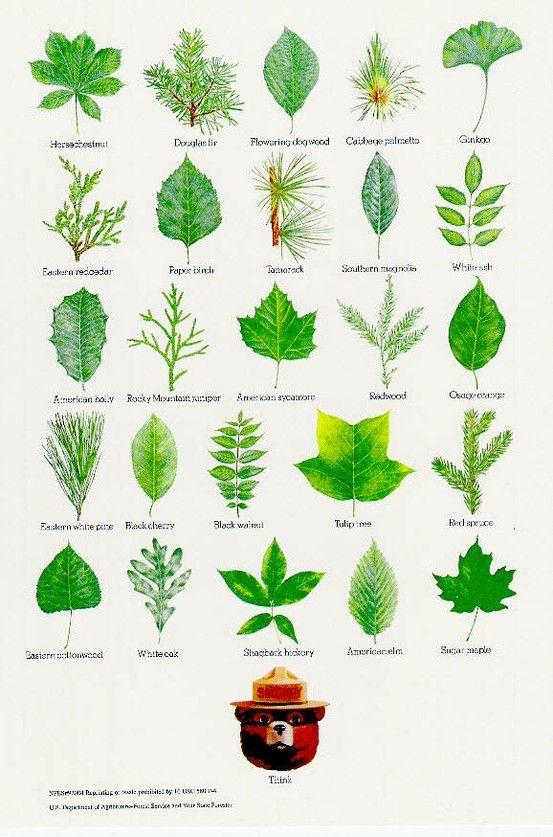 Plants Indiana Common