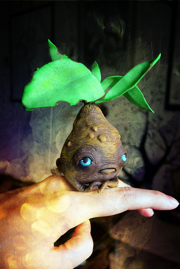 Harry Potter Plant Professor