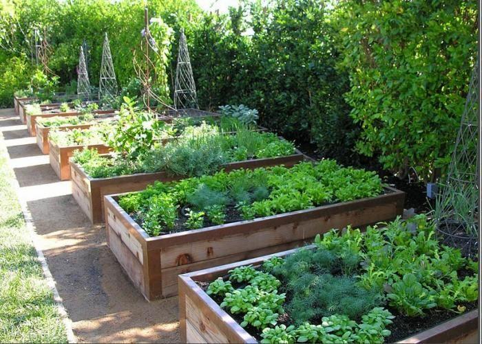 Raised Vegetable Garden Or Not