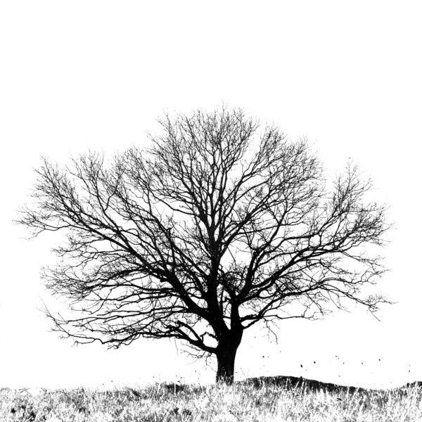 Black White Image Tree Seedlings