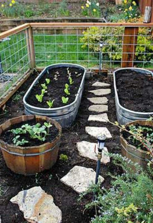 Cheap Vegetable Garden