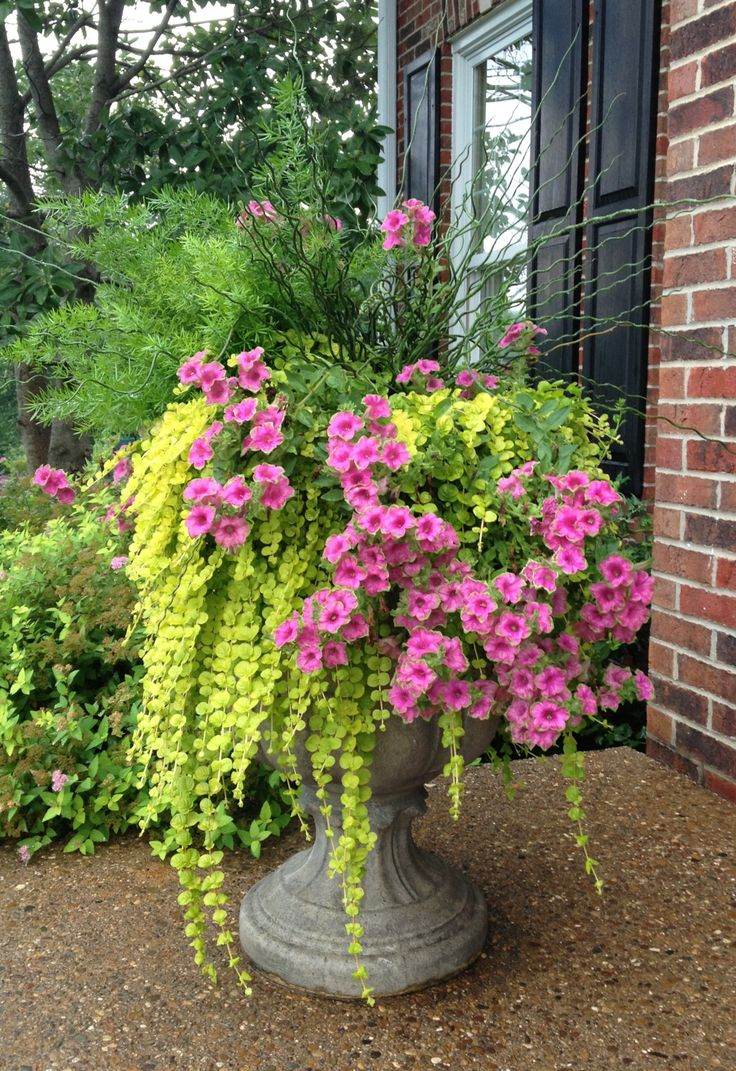 Black Flowers Pots Outdoor