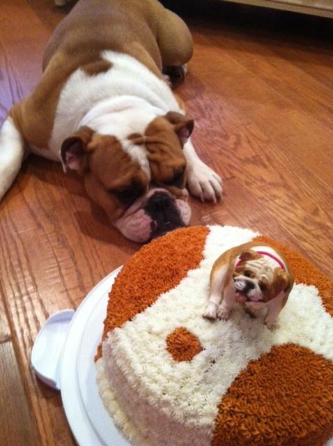 English Bulldog Birthday Cake English Bulldogs