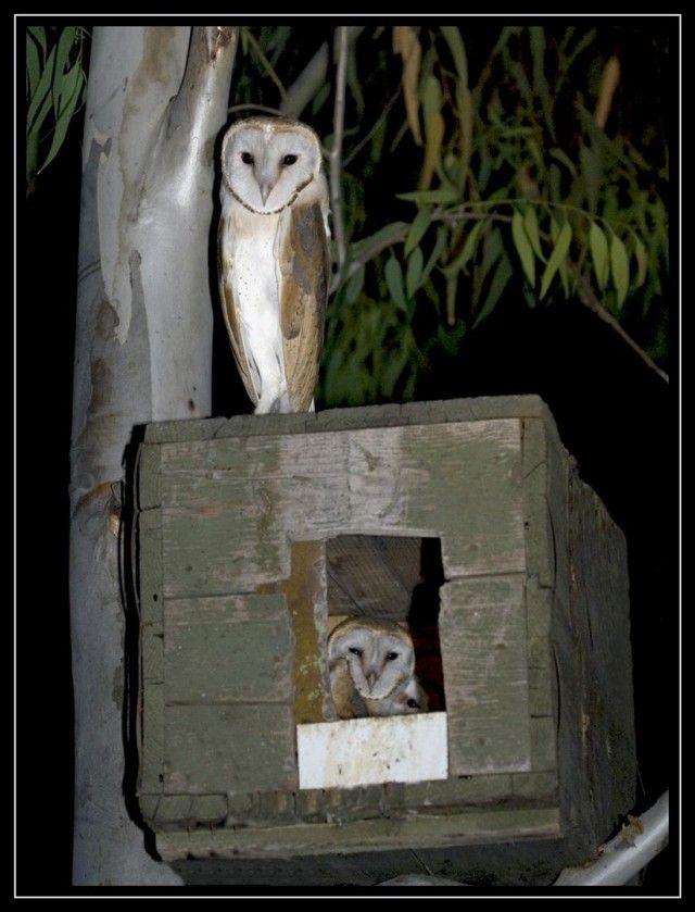 17 Best ideas about Owl House on Pinterest | Owl box ...