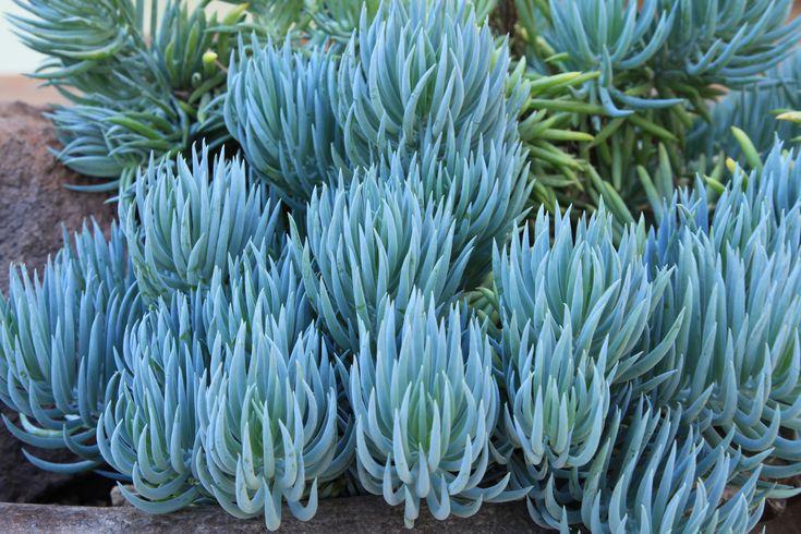 Exotic House Plants Sale