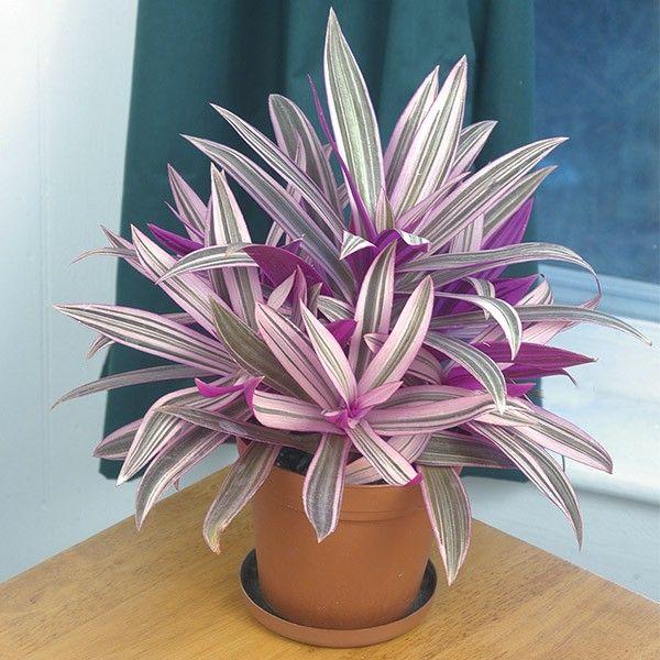 Top Ten Indoor Plants
