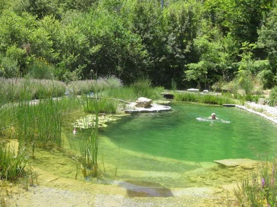 Small Natural Pond