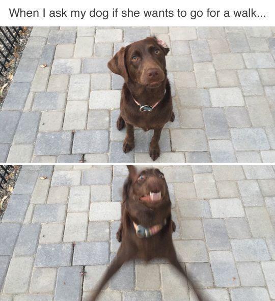 Take Out Cartoon Dog Walk