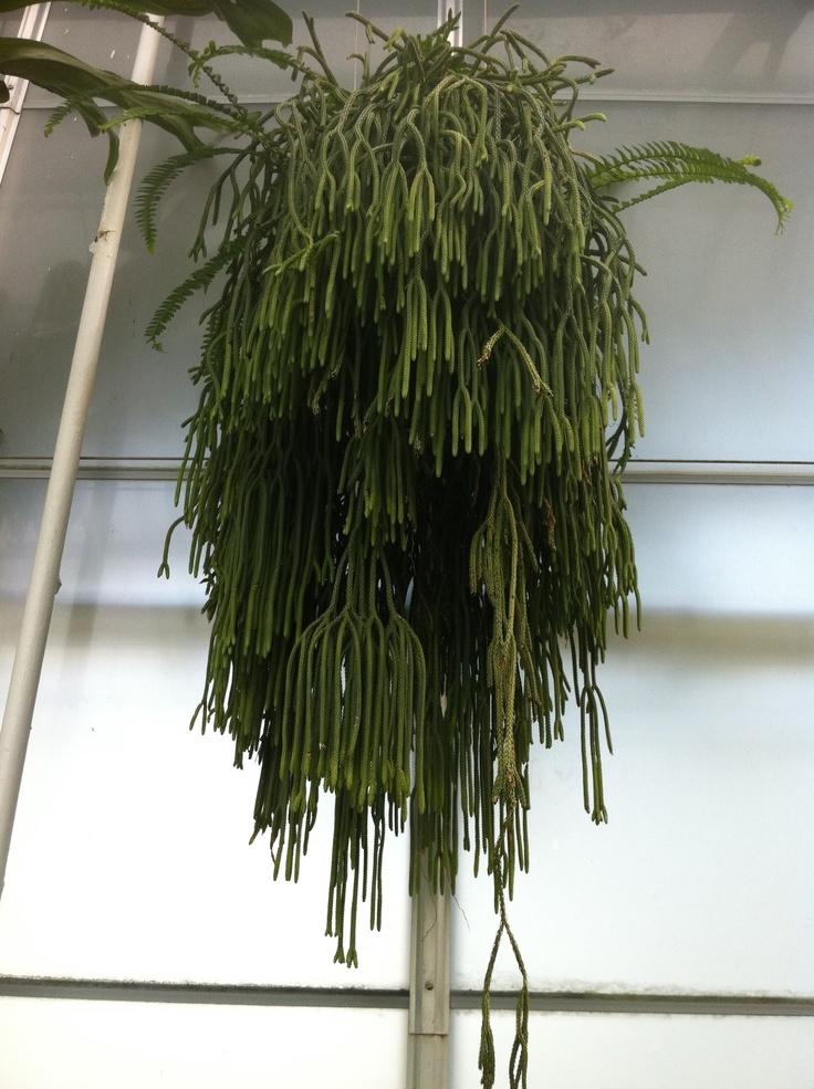 Outside Hanging Plants