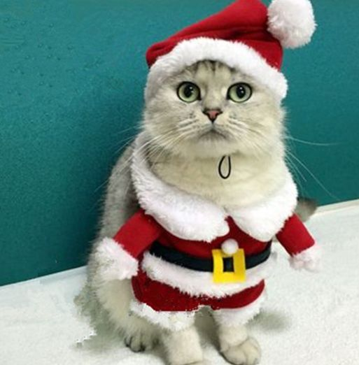 Kittens Santa Outfits