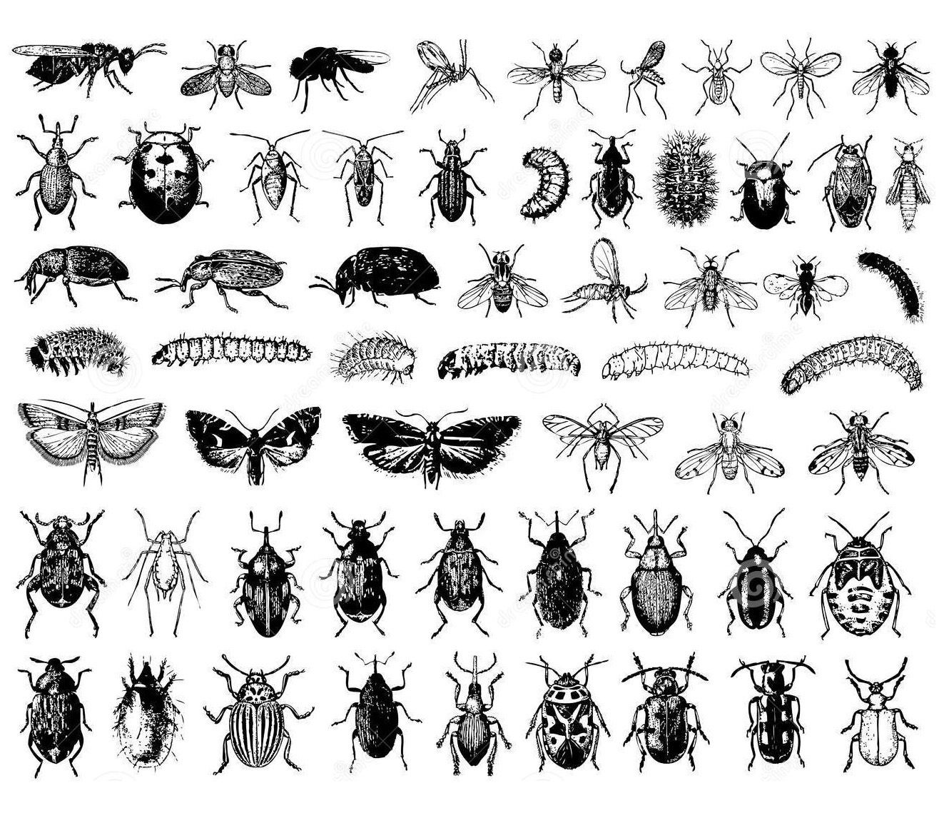 Free Coloring Page Coloring Difficult Insects A Sheet Of Insects