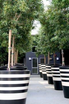 Image result for black and white stripes interiors   outdoor colour     giant black and white striped planter pots with trees