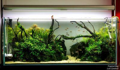 A Rocky Garden | AquaScaping World Forum