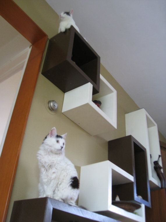 Cat Shelves On Wall Cubical Floating Wall Shelves