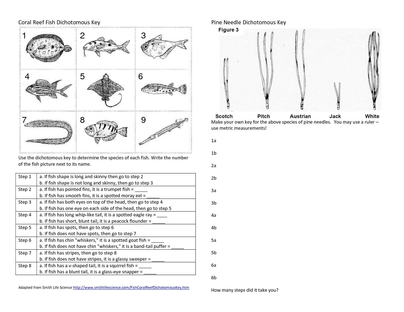 Dichotomous Key Pr Ctice Document S Le 6th Gr De P Terest