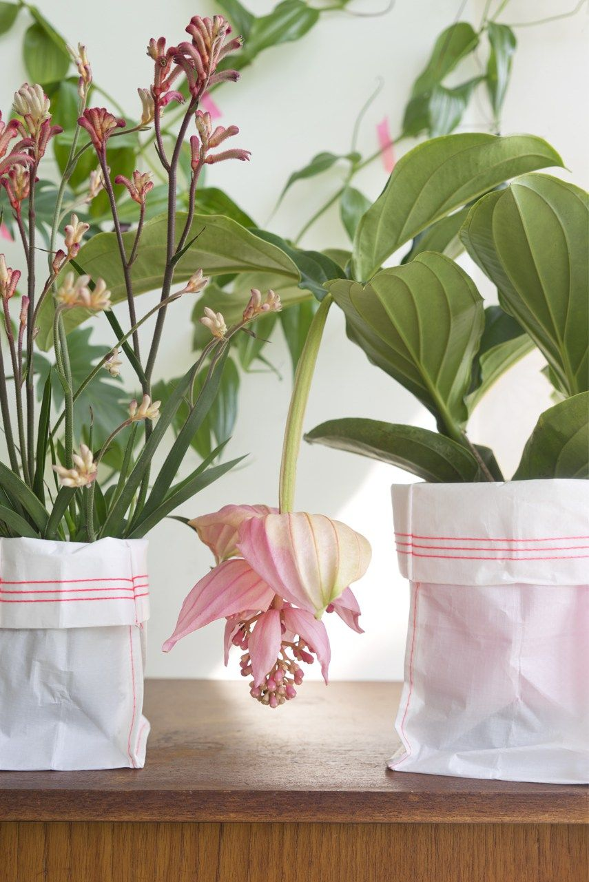 Best Kitchen Gallery: Tropical Beauties By Urban Jungle Bloggers Flowers Fotos Finds of Flowering Tropical House Plants  on rachelxblog.com