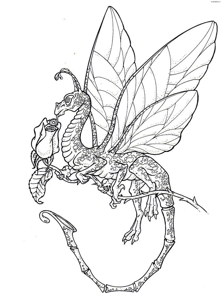 Coloring Pages Licious Dragon Coloring Pages For Adults Free