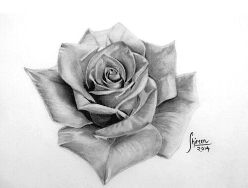 Realistic rose sketch done by shireen khan Instagram ...