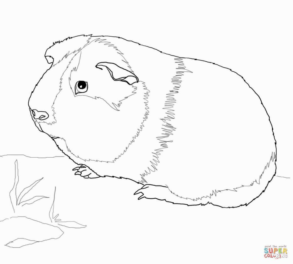 Guinea Pig Coloring Page Coloring Pages Pinterest