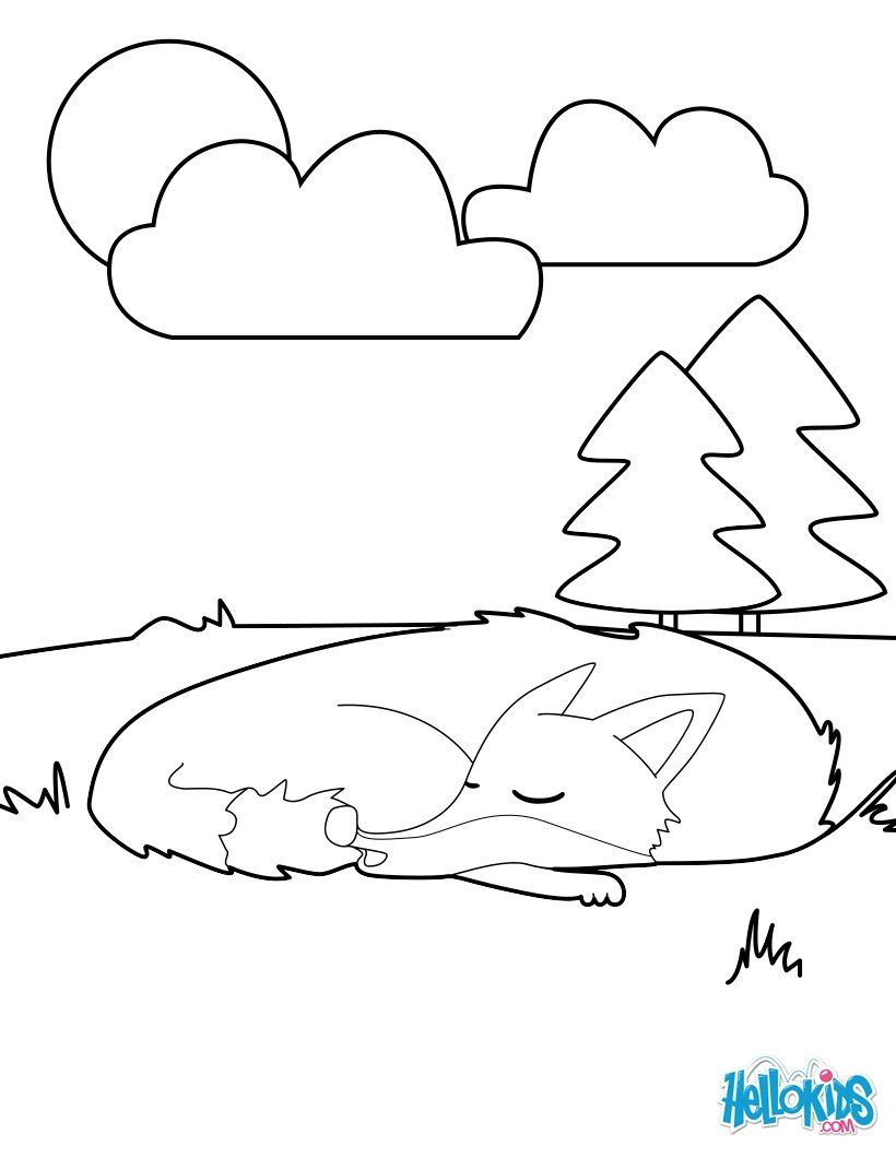 Sleeping Fox Coloring Page More Forest Animals Coloring Sheets On