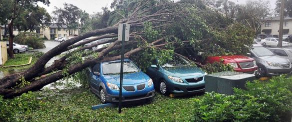 Hurricanes Harvey and Irma may have caused up to  200 billion in     PHOTO  A fallen tree lies atop a row of cars on Sept  10