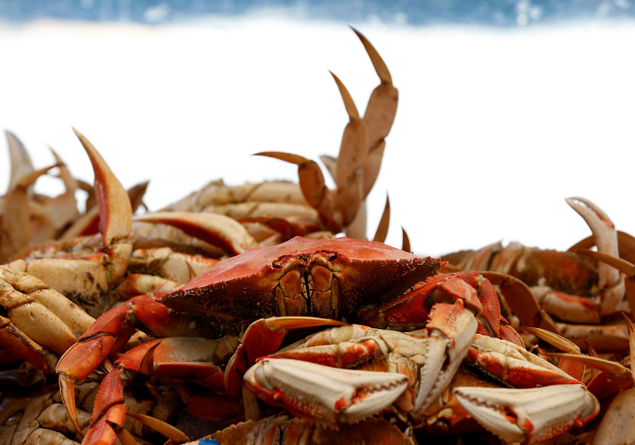 Fresh Grocer Dungeness Crab
