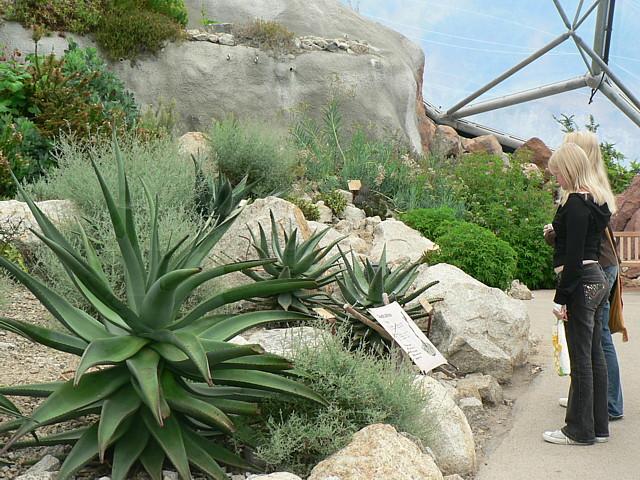 Desert Plants Eden Project 169 Rich Tea Cc By Sa 2 0