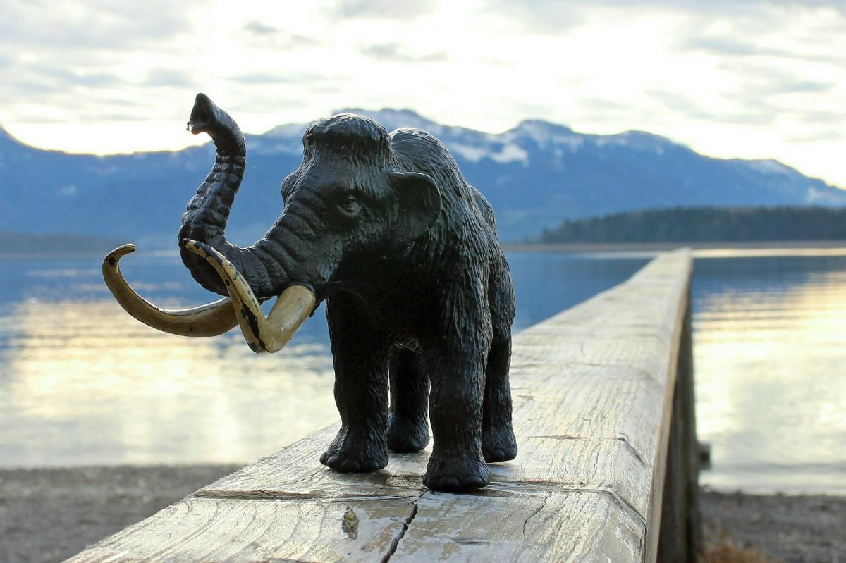 How Evolution Killed Mammoths 4 Cool Facts About Woolly