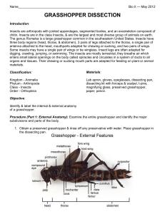 grasshopper internal dissection - HD791×1024