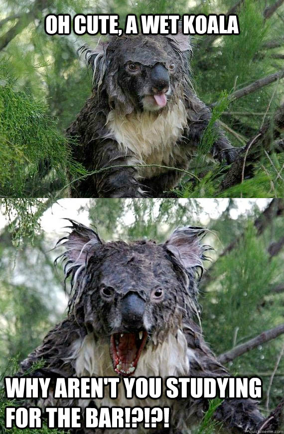Oh cute, a wet koala Why aren't you studying for the bar ...