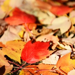 Belmont Lake State Park 326 Photos Amp 34 Reviews Parks