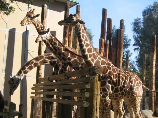 Fresno Chaffee Zoo Lights