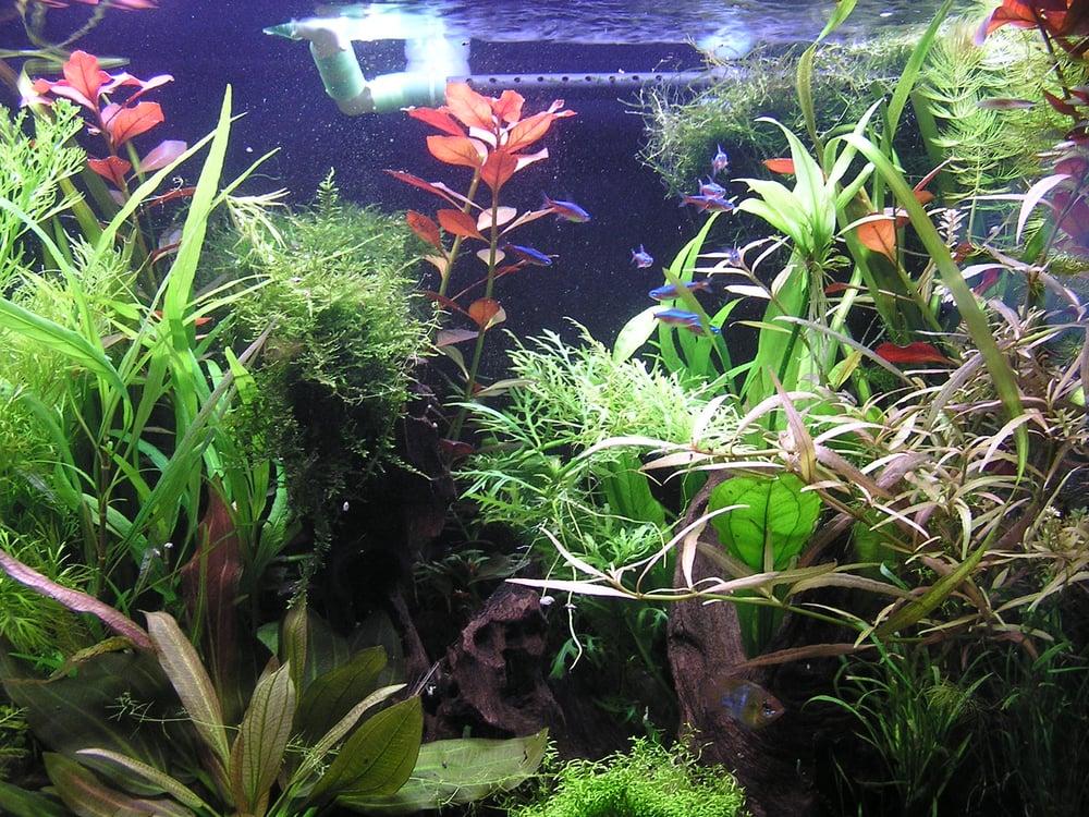 Aquarium Plants Near Me