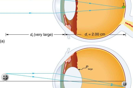 interior eye anatomy interior » Electronic Wallpaper | Electronic ...