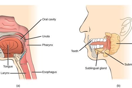 interior mouth structure jaw » Full HD MAPS Locations - Another ...