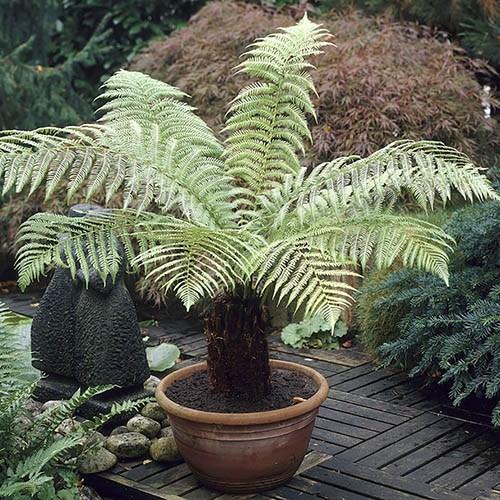 Plant Pots 25cm
