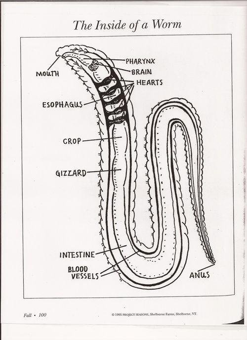 Textbook Earthworm Diagram Chacago