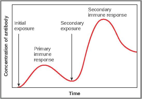 Graph Natural Medicine