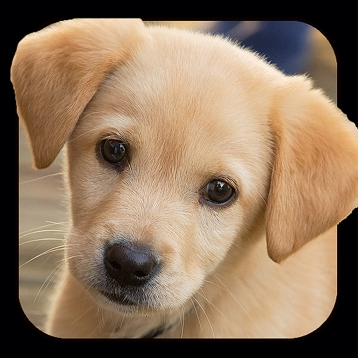 Dog   Puppy Backgrounds   Wallpapers Games App Review  iOS   0 99     Dog   Puppy Backgrounds   Wallpapers