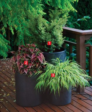 Stylish Shady Containers   FineGardening Low light doesn t have to cramp your creativity or limit your plant choices