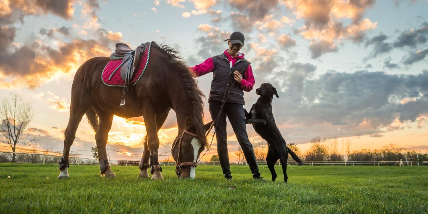 13 Flexible Animal Industry Jobs Flexjobs
