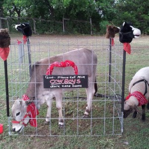 Hire God's Little Critters - Petting Zoo in Waxahachie, Texas