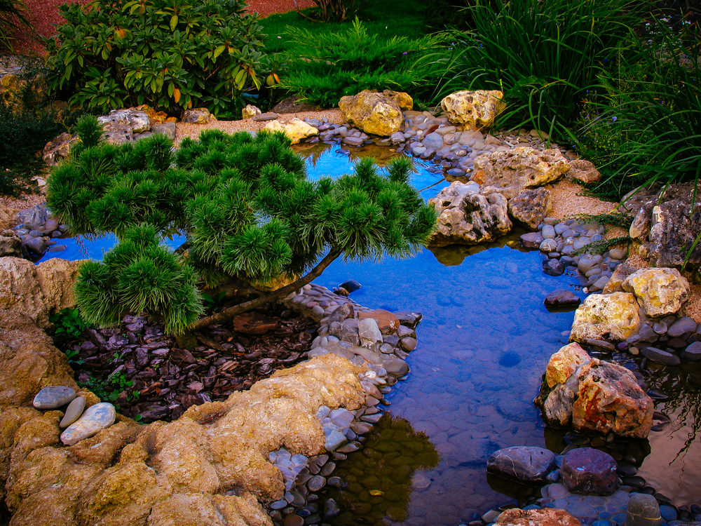 Backyard Pond Landscaping