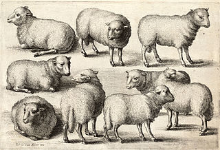320px-Wenceslas_Hollar_-_Nine_sheep