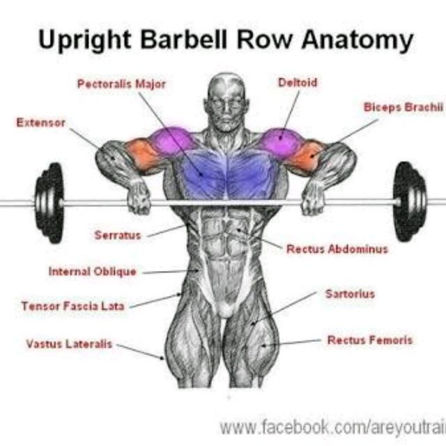 Barbell Upright Row - Exercise How-to - Workout Trainer by ...