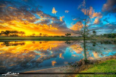 Abacoa Golf Course Sunset Bald Cypress Tree | Royal Stock ...