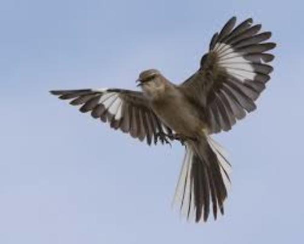 Main Events Of To Kill A Mockingbird Timeline Timetoast