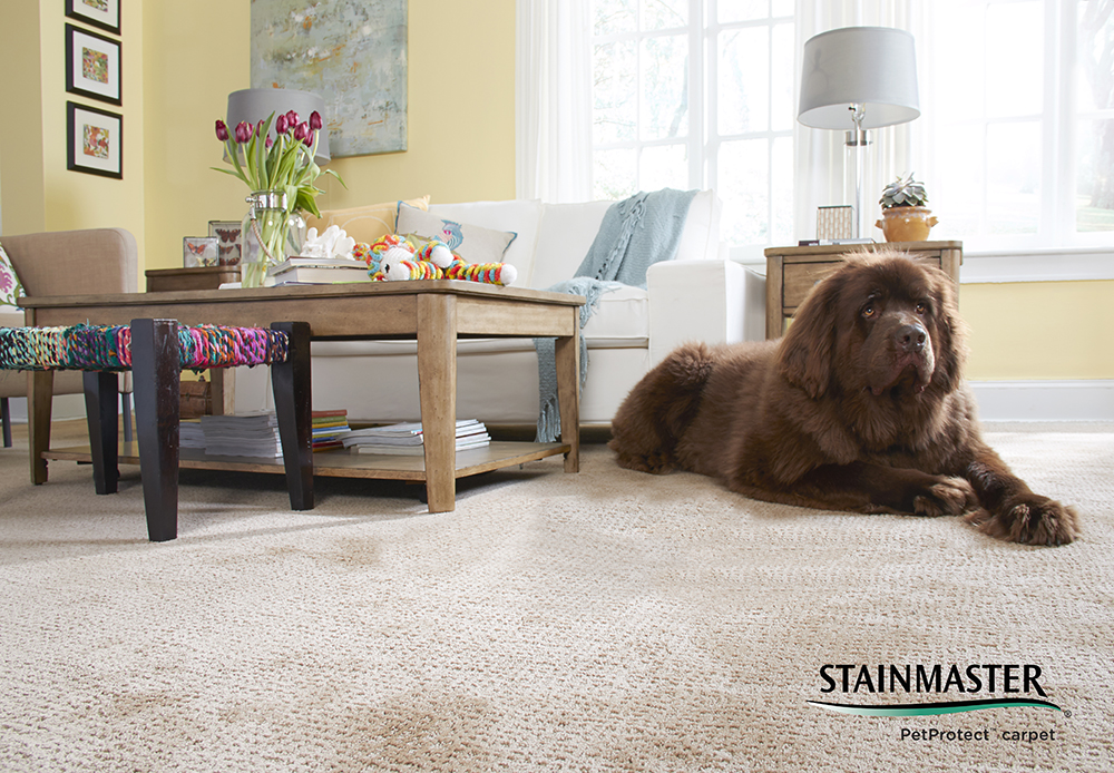 Coles Fine Flooring   Carpets   Stainmaster Carpet Buying Guide Choose the Best Carpet for Your Home