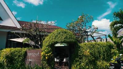 Sprout Bali | The Bali Bible